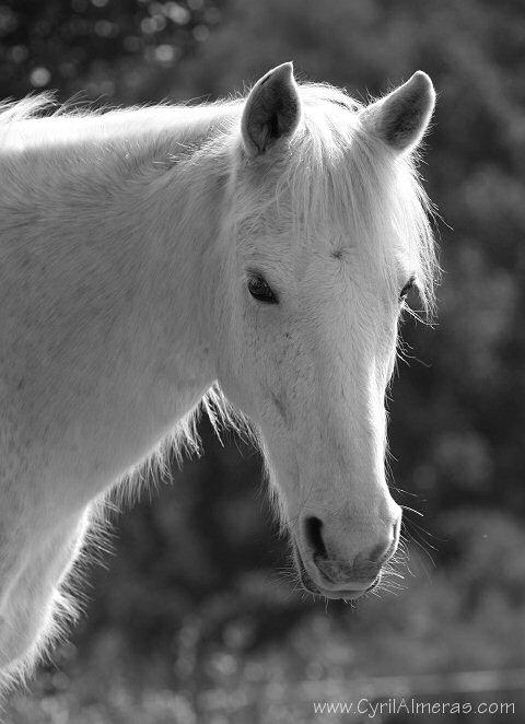 Photos noir et blanc femme enceinte - Cheval a imprimer noir et blanc ...